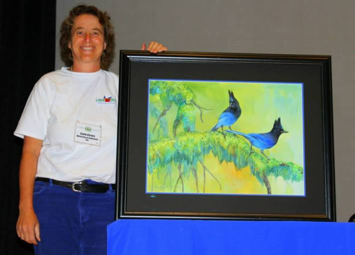 AOU_COS_meeting_StellerJay_Painting2